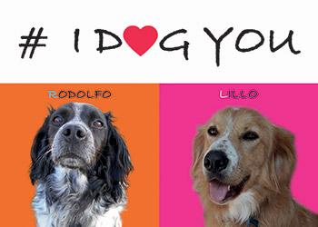 Domani al Giffoni Film Festival #IDOGYOU iniziativa dedicata agli amici animali e di chi di loro si cura, in silenzio e nell'ombra
